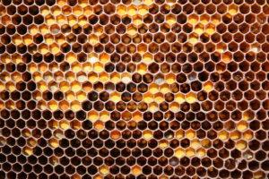 Чем пчелиная перга отличается от пыльцы, каковы особенности
