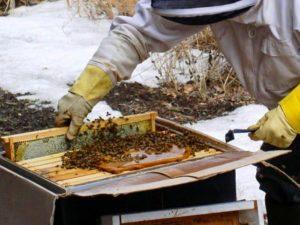 Как и чем можно подкормить пчел зимой