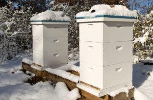 Как осуществляется зимовка пчел на улице