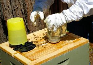 Как правильно сделать кормушку для пчел своими руками