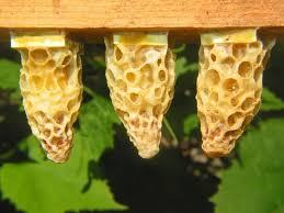 Как правильно сделать отводок пчел самым простым способом