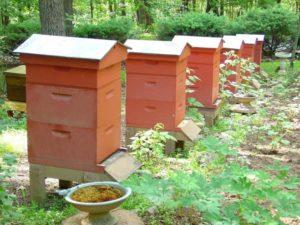 Особенности двухматочного содержания пчел в лежаках
