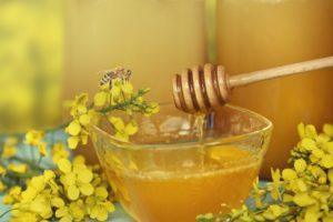 Полезные свойства и особенности рапсового меда