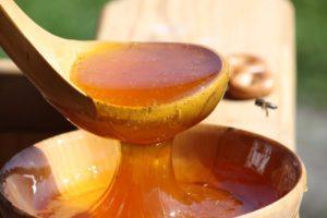 Полезные свойства и особенности таежного меда