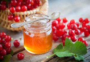 Рецепты приготовления калины с медом от кашля