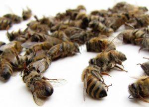 Как нужно хранить подмор пчелиный в домашних условиях