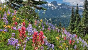 Какие есть медоносные травы для пчел