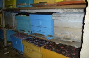 Особенности зимовки пчел в сарае