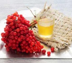 Полезные свойства и противопоказания калины с медом