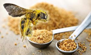 Полезные свойства и противопоказания цветочной пыльцы